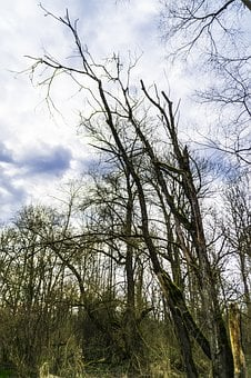 Nature, Sky, Clouds, Log, Old Tree, Forest, Green Tree