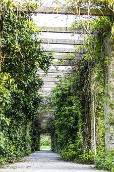Love Tunnel, Gang, Away, Avenue, Nature, Path
