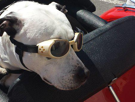 Dog, Glasses, Funny, Animal, Pet, Drive, Travel, Retro