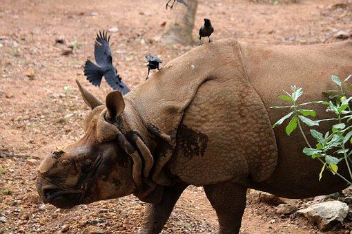 Rhinoceros, Animal, Zoo, Rhino, Wildlife, Safari