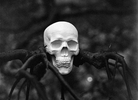 Skull, Tree, Halloween, Horror, Scary, Spooky, Dead