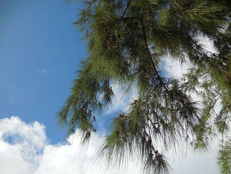 Filao, Indian Ocean, Sun, Clouds, Sky