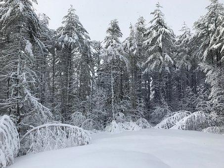 Winter Wonderland, Snow, Wonderland, Cold, Landscape