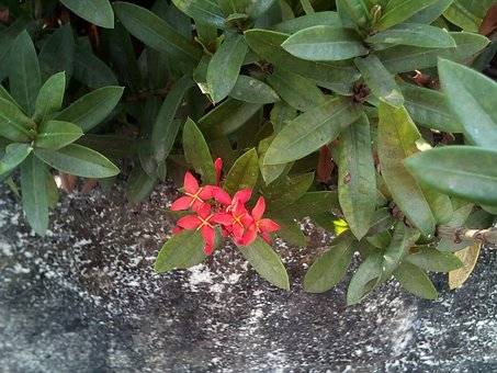 Flowers, Flower Pin, Red Flowers, Bush, Tree, The Wall