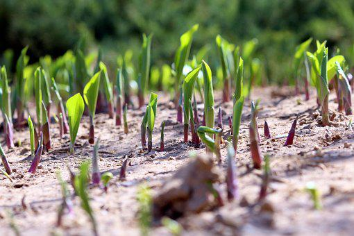 Sprout, Bustling With Life, Spring