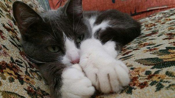 Cat, Kitten, Mouuu