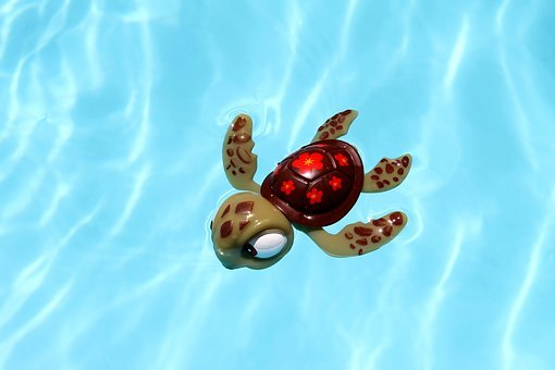 Turtle, Pool, Toy, Water