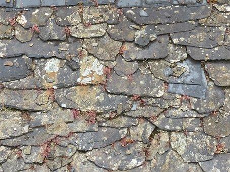 Slate, Roof Tiles, Roof, Old, Rose, Succulent, Grey