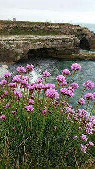 Sea Pinks, Clifftop, Sea, Rocks, Flower, Seaside
