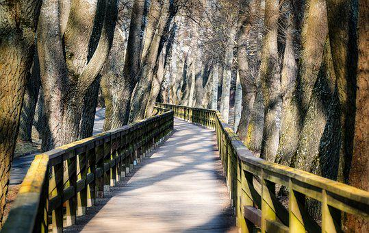 Web, Bridge, Wooden Bridge, Park, Nature, Wood, Railing
