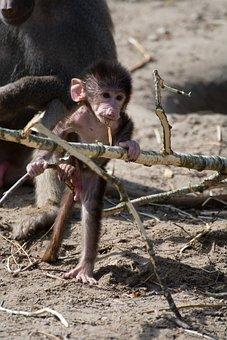 Cute, Monkey, äffchen, Zoo, Sweet