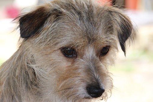 Dog, Sad, Eyes, Dog Eyes, Animal Welfare, Expose