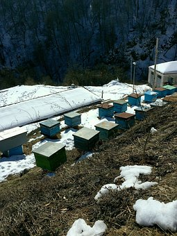 Apiary, Apiary In The Mountains