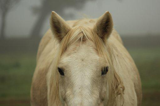 Pony, Horse, Domestic, Cute, Mist, Fog, Natural Horse