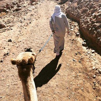 Sinai, Camel, Mountain Mose, Egypt, Bedouin