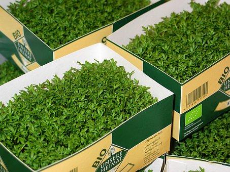 Garden Cress, Cress, Food, Nutrition, Eat