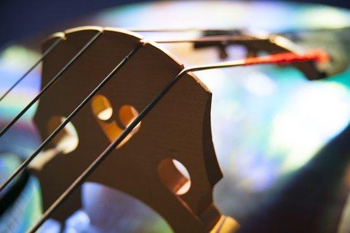 Bass, Instrument, Strings, Bridge