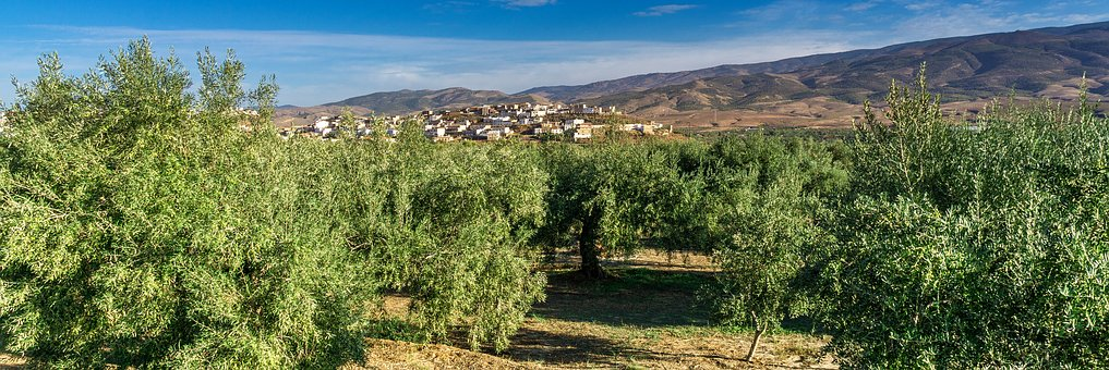 Landscape, Travel, Olive Trees, Mountains, Spain