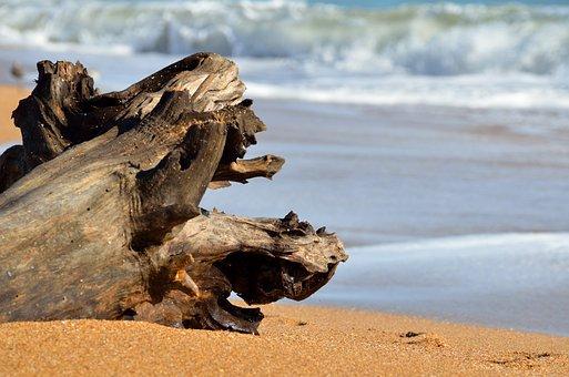 Driftwood, Beach, Ocean, Waves, Coast, Nature, Sea
