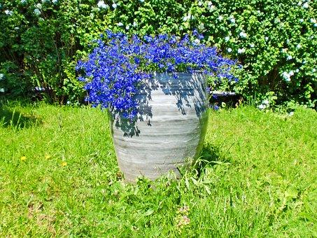 Flower, Flowers, Flowering, Plant, Nature, Garden