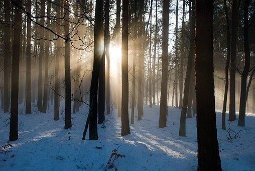 In The Forest, Sunshine, Gegenlichtaufnahme, Nature