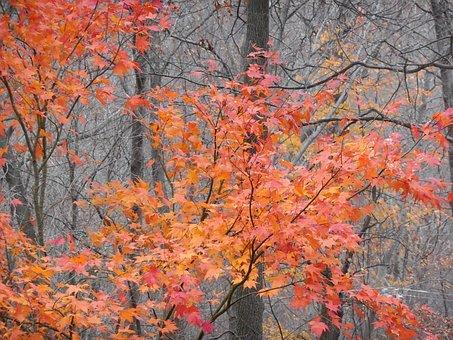 Fall, Trees, Leaves, Change, Autumn, Season, Leaf