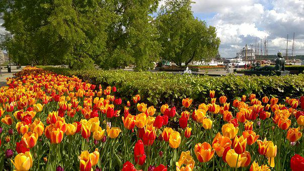 Tulips, Port, City, Oslo