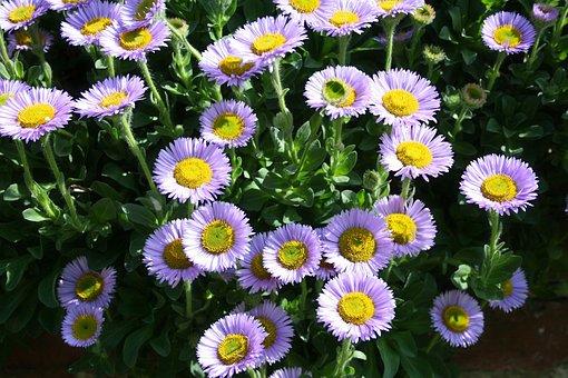 Flower, Purple, Attractive, Stunning, Garden, Plants