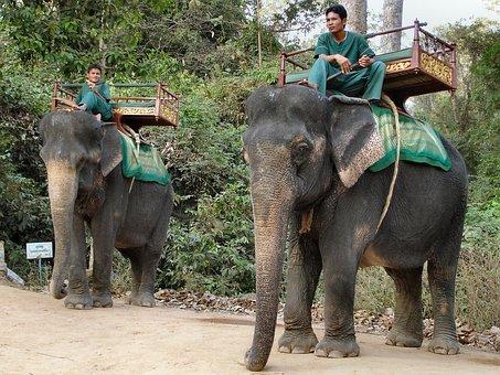 Elephant, Cambodia, Animal, Beasts Of Burden, Elephants