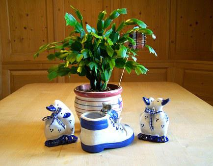 Christmas Cactus, Blue And White Ornaments, Still Life