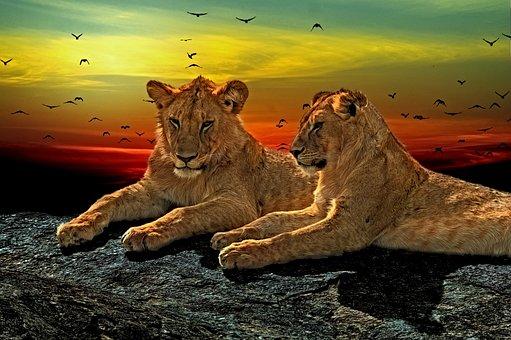 Lions, Cats, Fur, Male, Big, Animal, Predator, Feline
