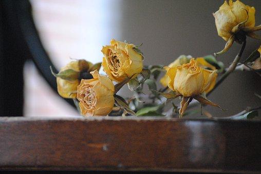 Rose, Dead, Flower, Floral, Vintage, Death, Halloween