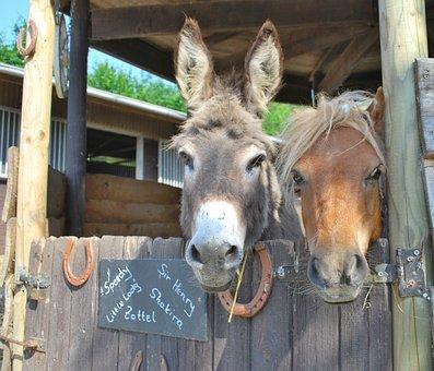 Donkey, Pony, Beast Of Burden, Workhorse, Cattle, Farm