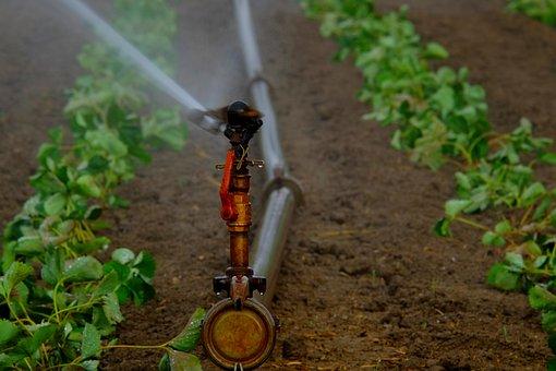 Water Sprinklers, Irrigation, Field, Artificial