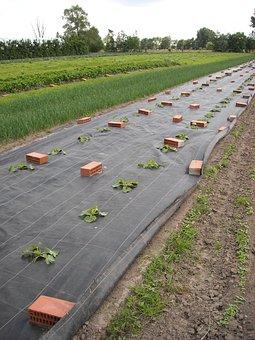 Vegetable Garden, Gardening, Growing, Agriculture