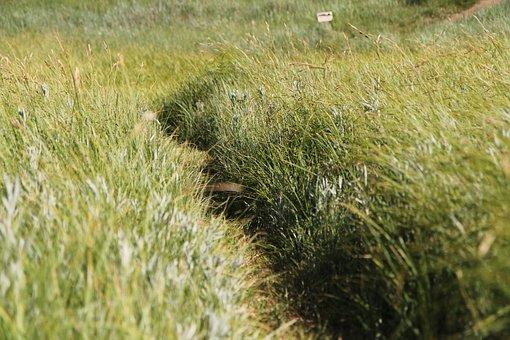 Yosemite, Meadow, Grass, Park, National, California