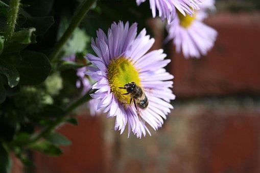 Bee, Flower, Pollen, Plant, Pink, Garden, Nature, Macro