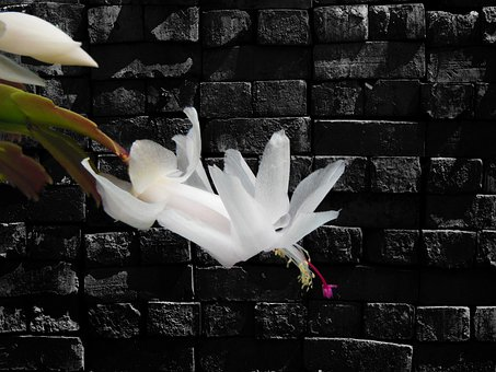 Wildflower, Flower, Christmas Cactus, Floral, Plant