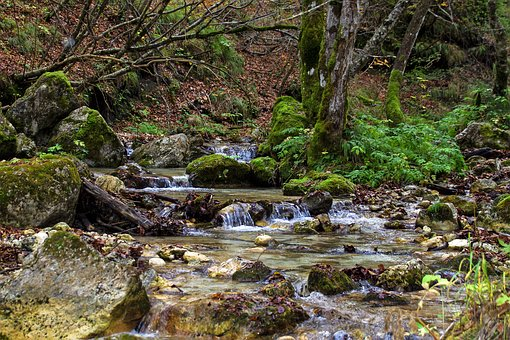 Stream, Water, Clear Water, Source