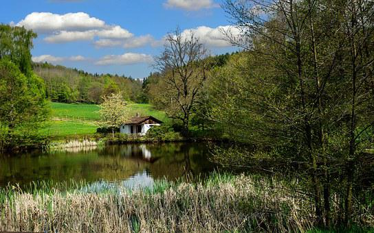 Thuringia Germany, Thuringian Forest, Landscape, Forest