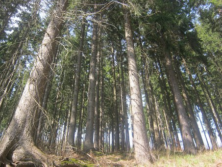 Thuringian Forest, Forest, Thuringia Germany, Spruce