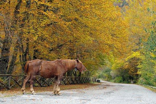 Trees, Forest, Beech, House Barrea, Camosciara