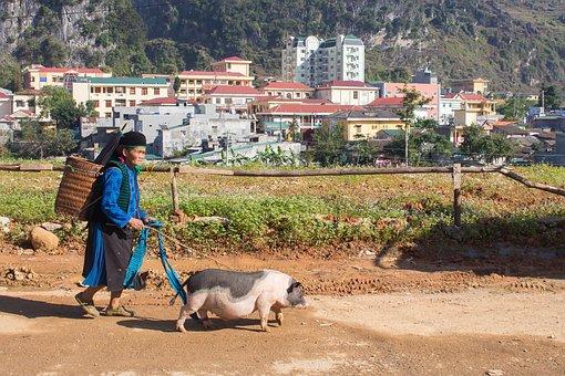 Woman, Old, Pig, Poor, Vietnam, Dong Van, Bazaar