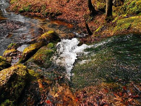 Stream, Valley Będkowska, Valleys Near Cracow, Water