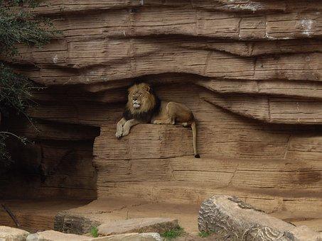 Lion, Nature, Animal, Wildlife, Wild, Predator, African