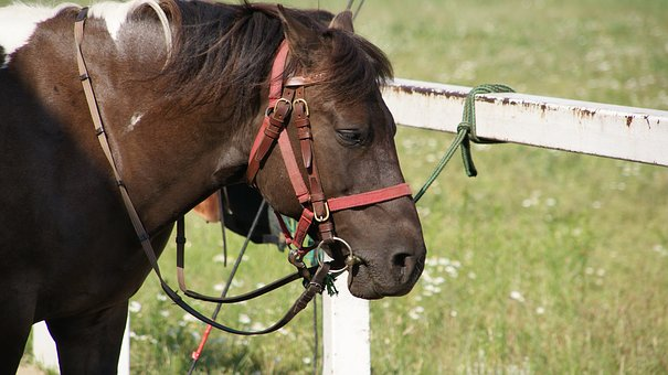 The Horse, Bridle, The Head Of A Horse, Bay, The Reins
