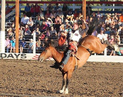 Rodeo, Horse, Cowboy, Bucking Bronco, Bucking, Western