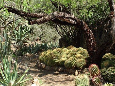 Desert, Cactus, Nature, Succulent, Plant, Botanical