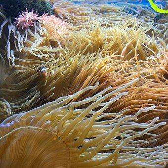 Deep, Sea, Water, Ocean, Holiday, Underwater World