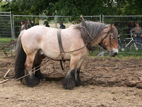 Plowhorse, Horse, Work, Animal, Agriculture, Nature
